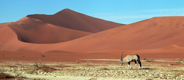 Self drive - the only way to experience a Namibia safari
